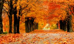 U ovim jesenjim radostima trebali bismo uživati svakodnevno