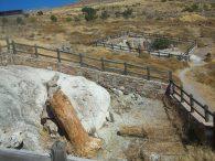 Pronađeno drveće staro preko 18 milona godina