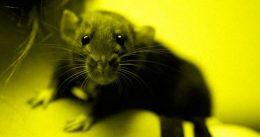 """Istraživanje naučnika: Društvene mreže nas """"pretvaraju"""" u gladne štakore"""