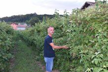 Velikokladuški malinar Senad Sijamhodžić: Prednosti eko uzgoja