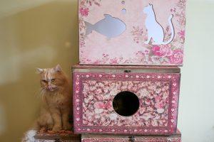 Neobičan Muzej mačaka u Teheranu: Dom za desetine malih prijatelja ljudi